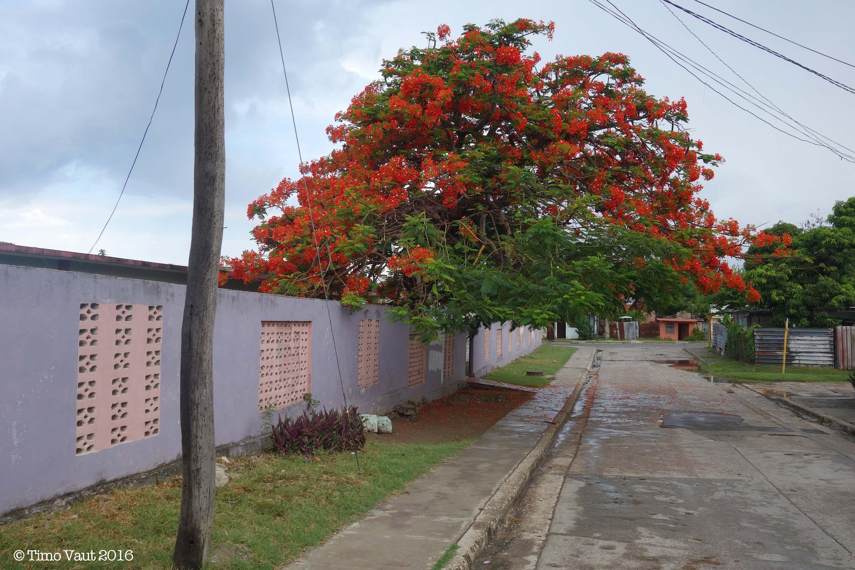 CUBA15-1